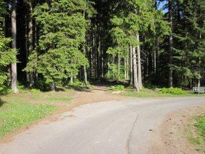 Abzweig Waldstück Brand