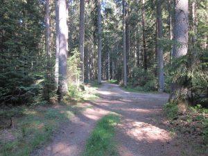 Weg zum Eichhörnchenweg