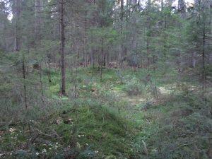 Blick vom Stutzwaldweg zum Krähenhardtbrunnen im Wald