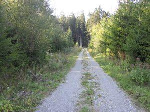 Wald- und Grenzweg Gallushütte zur Bundesstrasse