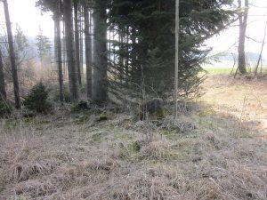 Grenzstein im Tannenbühl Wäldchen