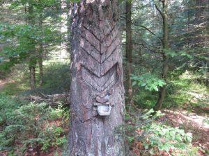 Harzbaum