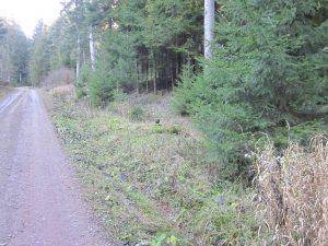 rechts der Harzhüttebrunnen am Brunnentröger Weg