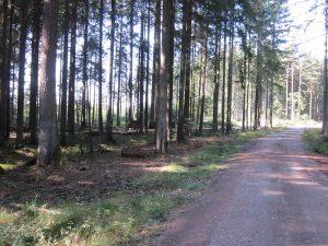 Waldweg unterhalb der Deponie Bengelbruck