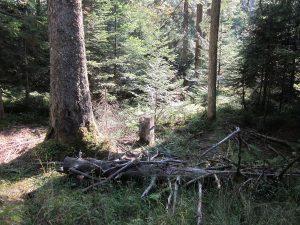 Grenzstein rechts der Straße im Wald