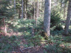 Der nächste Grenzstein wurde in Sichtweite aufgestellt.