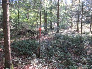 Der rote Pfahl zeigt den Standort eines alten Grenzsteines
