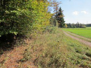 Blick nach Kälberbronner Wiese und Hilpertshöfle
