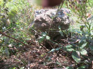 ein weiterer kleiner Stein