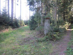 Der rechte Weg führt nach Musbach