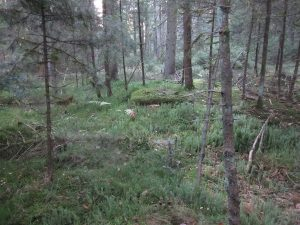 Krähenhardtbrunnen im Wald versteckt
