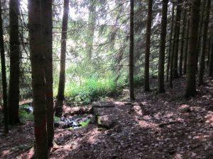 Kindlesbrunnen im Wald verborgen
