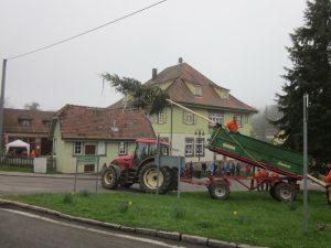 modernes Maibaumaufstellen mit Traktor