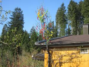 Maibaum in Dachrinne
