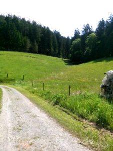 Scheidgrund von Reichenbacher Tal aus gesehen