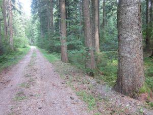 Gallusweg zum ehemaligen Hüttenplatz