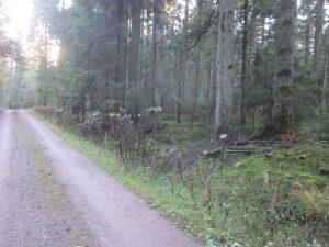 Aus dieser Richtung befindet sich der Krähenhardtbrunnen 1 rechts vom Stutzwaldweg
